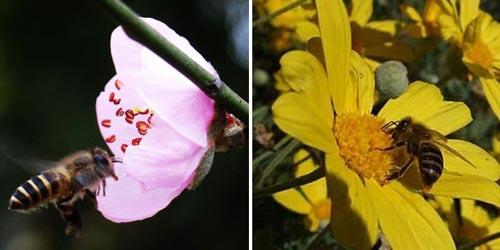 Bee—Huge effort and devotion