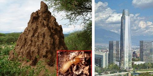 African Termites—Team Work Spirit